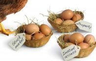 Mark Lyford – Eggs In Baskets