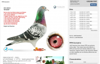Meet Armando – The Worlds Most Expensive Racing Pigeon. €1,250,000.